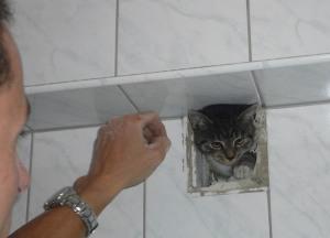 Zum Schluss kletterte die Katze völlig verstaubt aus dem Lüftungsschacht (Foto: Feuerwehr Essen)
