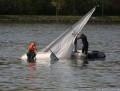 Bergung eines gekenterten Segelbootes auf der Donau bei Hollenburg
